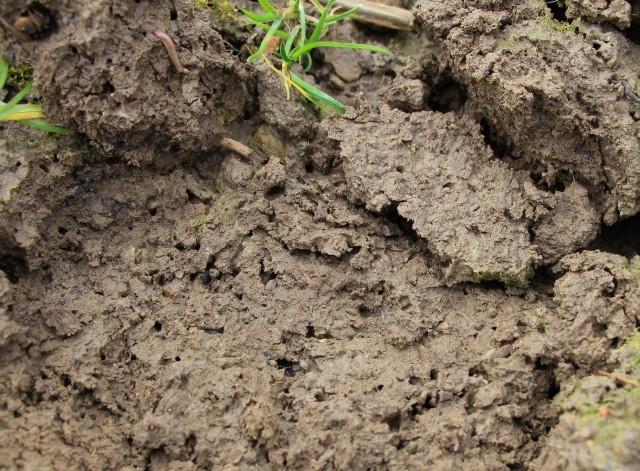Terre argileuse aérée par les vers de terre