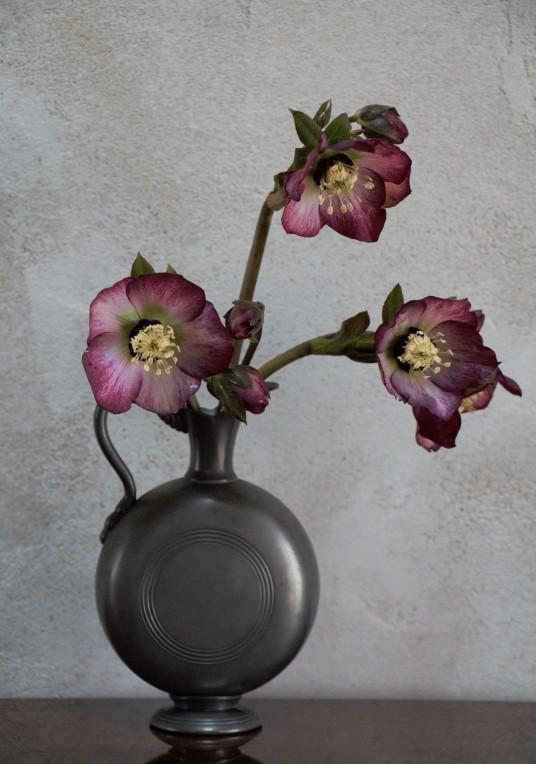 Hellébores en vase