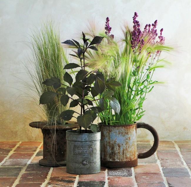 LTAJ-PlantesEnPots