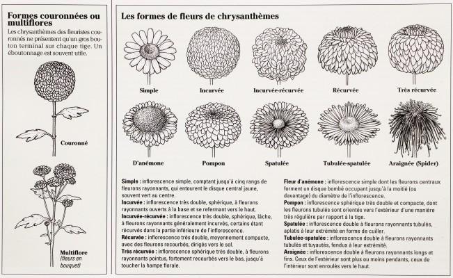 """Le tableau explicatif de """"L'encyclopédie universelle des 15000 plantes et fleurs de jardin"""" de Bordas"""