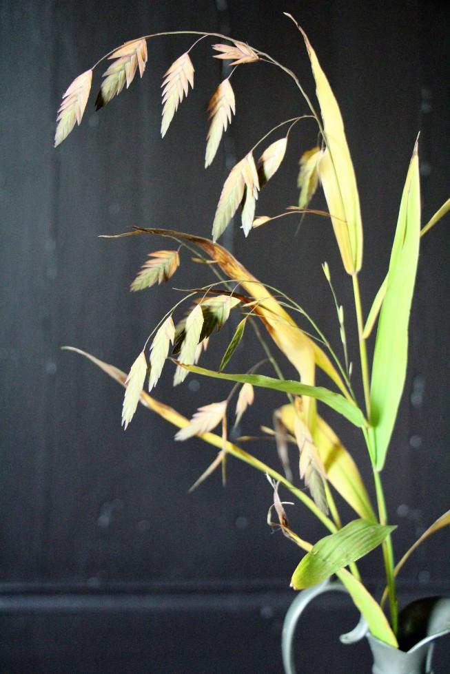 ltaj-chasmanthiumlatifolium